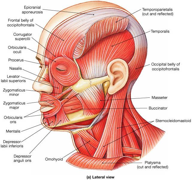 VERTICAL INCISION IN THE POSTERIOR MANDIBLE. THE LIE THEY TOLD ME AT ...